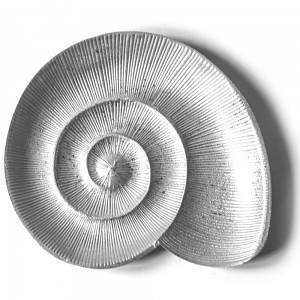 Patera SEA SHELL