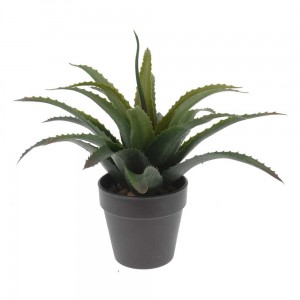 Aloes donica antracyt 25 cm