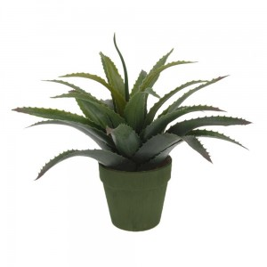 Aloes donica khaki 25 cm